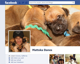facebook great dane